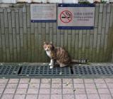 smoking is prohibited