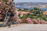 Costa esmeralda /otra Calle con agradable aroma a Laureles .jpg