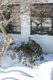 Olli in winter.JPG