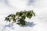 Olli in Winter 2.JPG