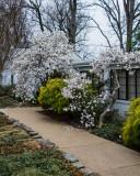 Olli in Spring.JPG