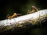 Ant X-ing.jpg