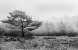 Foggy Afternoon.jpg