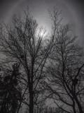 Moon Glo.jpg