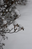 Winter Cotton.JPG