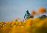Harvesting Color II