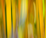 Bamboo Distortion