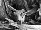 skull_02_6675.jpg
