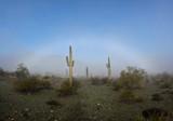 Fog In The Desert -- February 1, 2015
