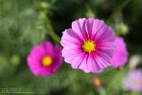 Flower snapshot