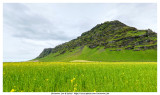 Green Field Near Eyjafjallajokull Erupt