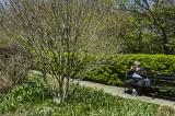 Central Park #12200