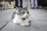 Cat, Bayard Street _4073