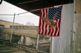 Flag 11171
