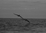 birds_of_florida