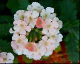 0128 flower id.jpg