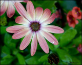 0129 flower id.jpg