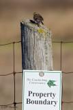 9471 Savannah Sparrow and sign.jpg
