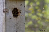 0228 Beehive.jpg
