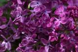 9986 Lilac next door.jpg