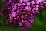 9988 Lilac next door.jpg