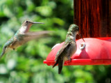 Enjoying the Hummingbirds