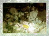 My Feline Companions..