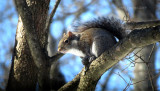 Playful Young Squirrel