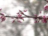 Spring Snow Storm.
