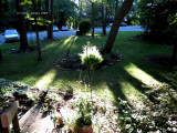 Evening Sun on Front Yard