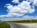 Tobacco Farm and Big Sky!