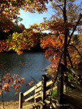 Favorite Autumn Pics ~ 2014