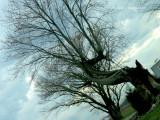 A Tree with Many Twists