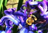 Pollinating has Begun!