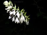 Hostal Blossoms