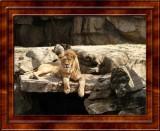 Wildlife Slideshow Videos