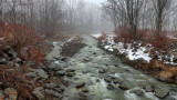 Tracy Creek in the Fog 2