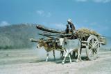 Oxcart at Kamala River Nepal