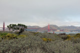 View to Golden Gate from the Crissy Field Marsh