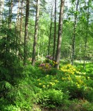 Azalea and Rhododendron Park