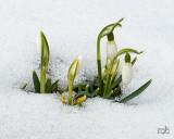 Spring is not so far away / Det spirende forår er på vej