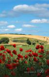 Poppys and clouds / Valmuer og skyer