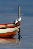 Seagulls in a boat / Måger i en båd