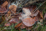 The first frost / Den første frost