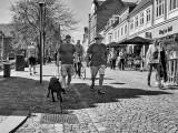 Walking the dog / Tur med hunden