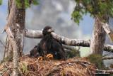 2015 Skinner butte eagles
