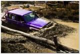 Purple Patrol