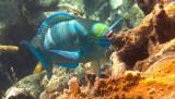 Vie sous-marine à Roatan / Underwater life at Roatan (Honduras)