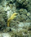 Apnée à Holguin/Snorkelling at Holguin (Cuba)
