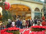 Center of the Atrium